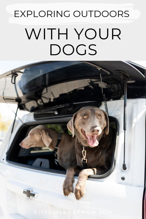 dogs and outdoors