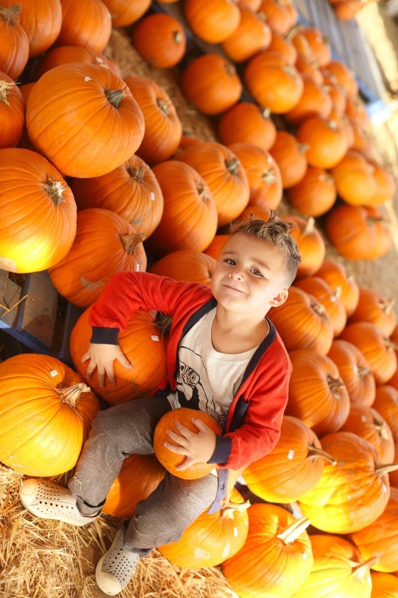 boy and pumpkins
