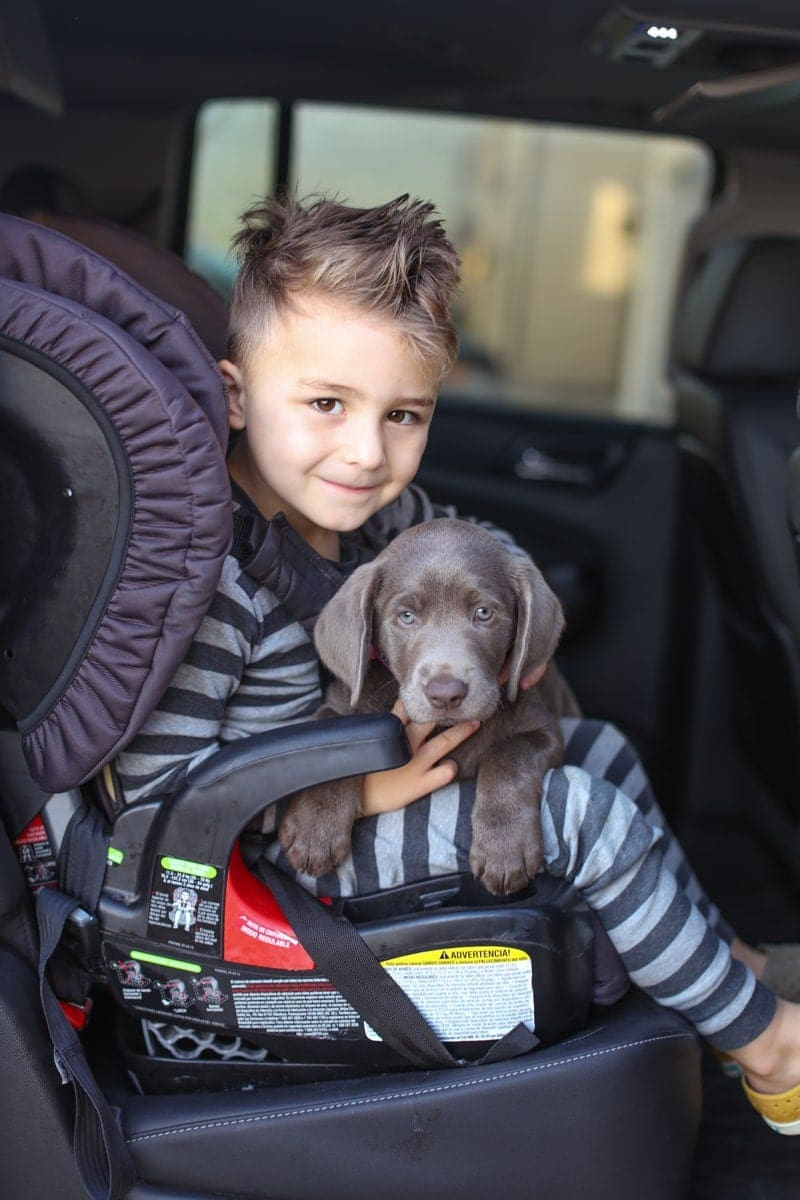 child and dog in car