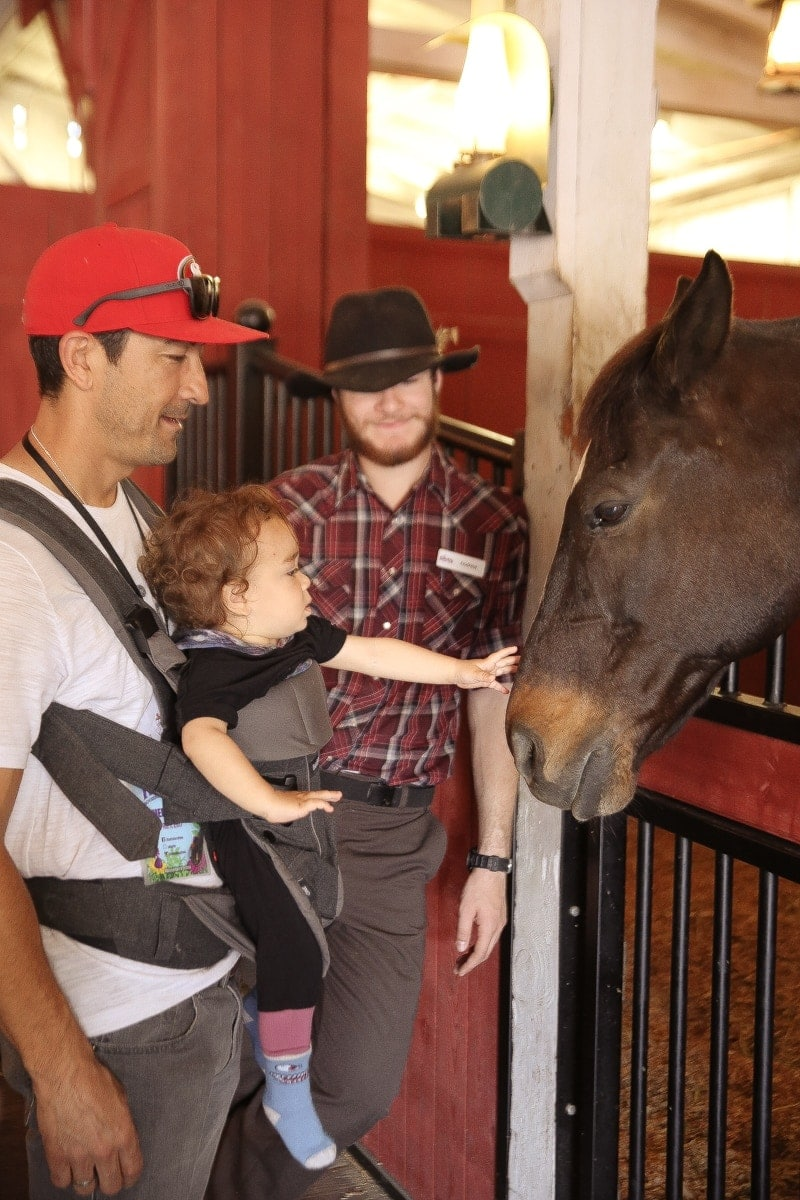 baby petting horse