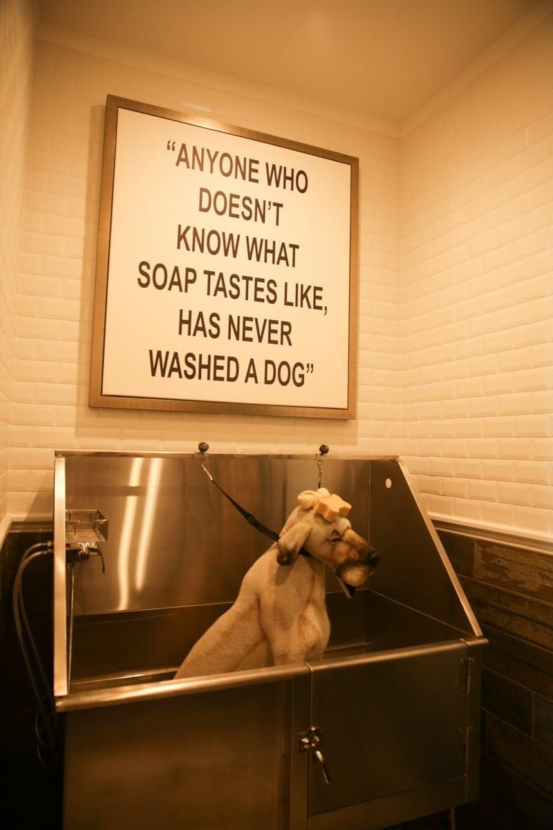 dog bath and decor