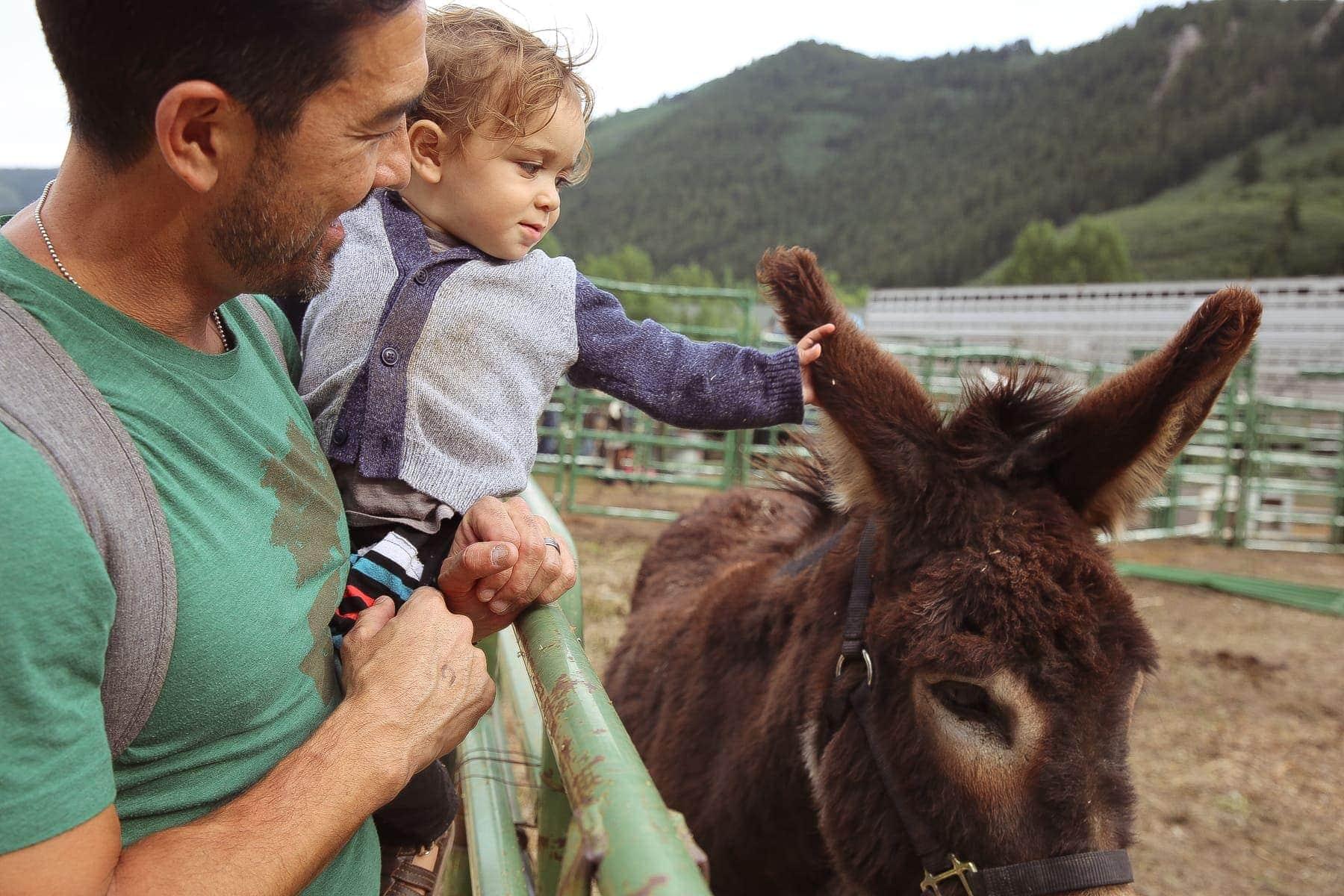 baby petting donkey