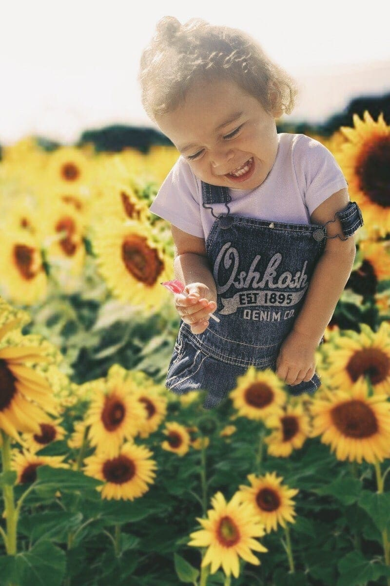Baby laughing amongst the sunflowers