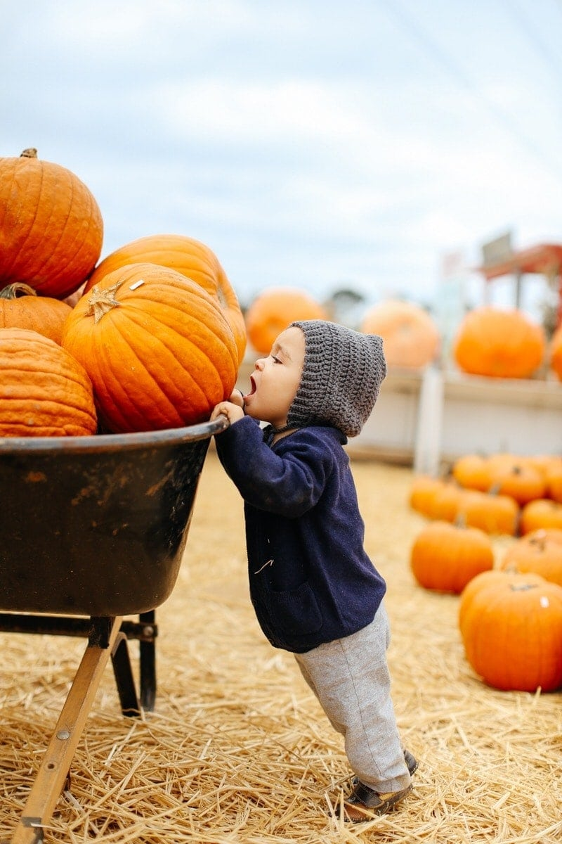 Wheelbarrow of pumpkins and baby