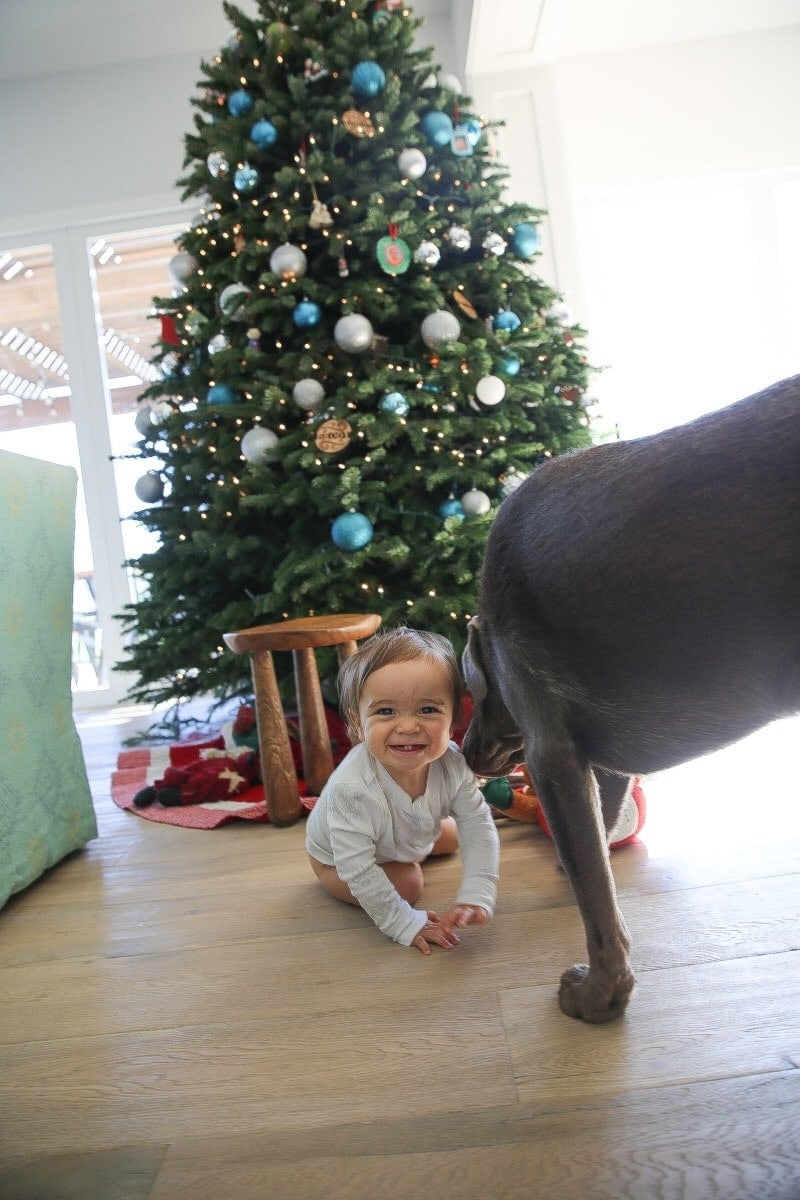 baby and dog by christmas tree