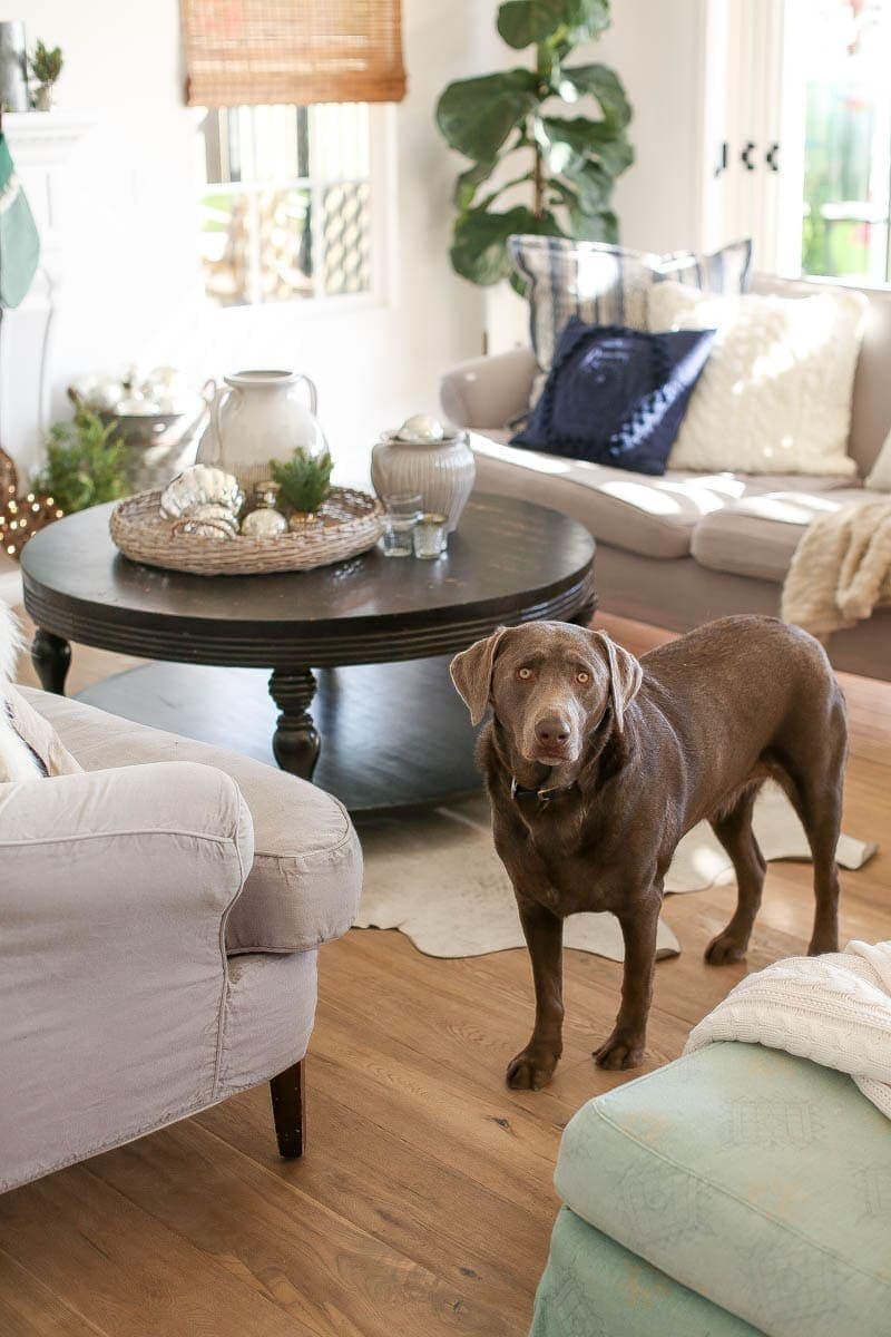 Beautifully decorated living room with dog