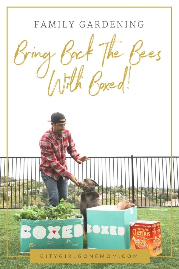 Building a bee-friendly mini garden with Boxed