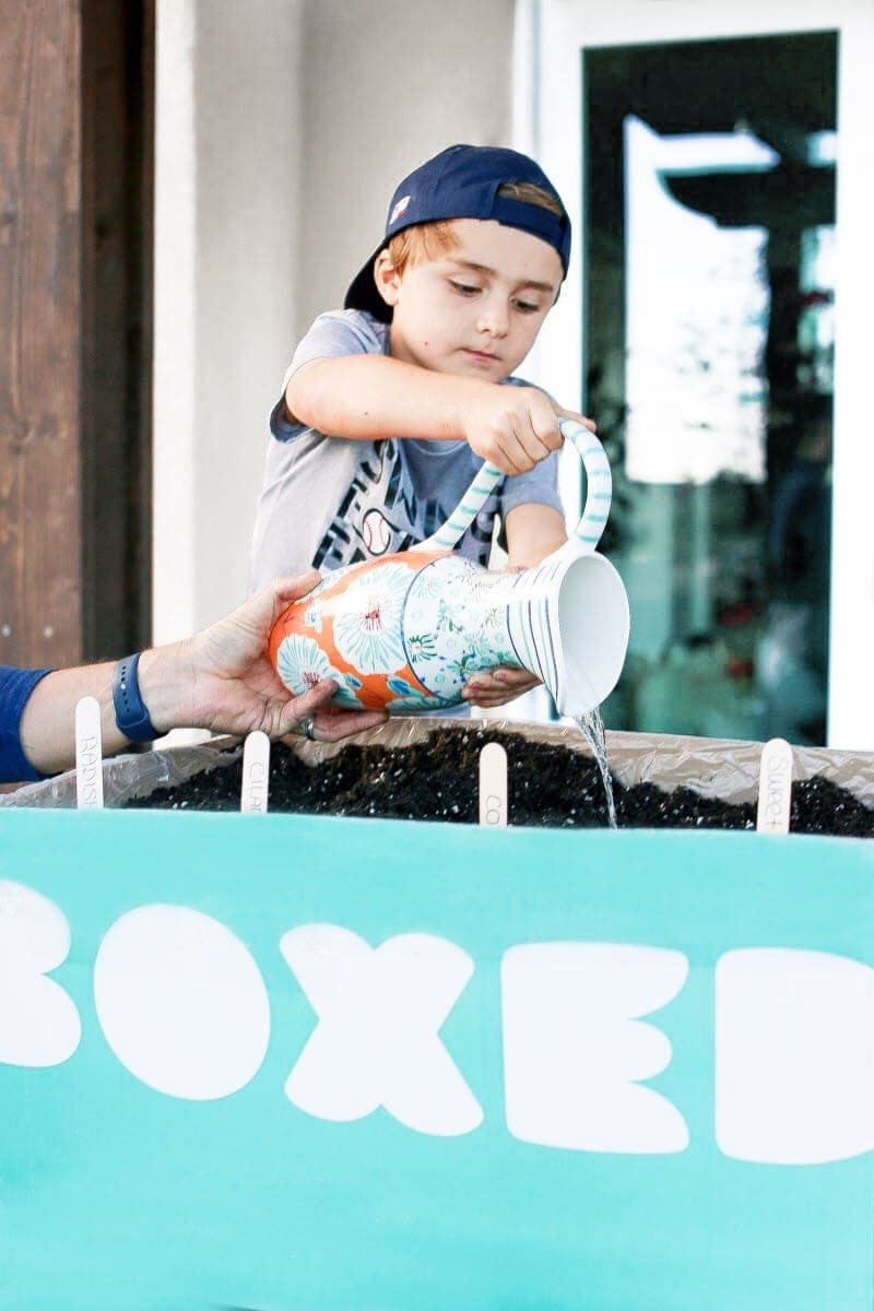 Boy watering the seeds in the Boxed mini bee garden