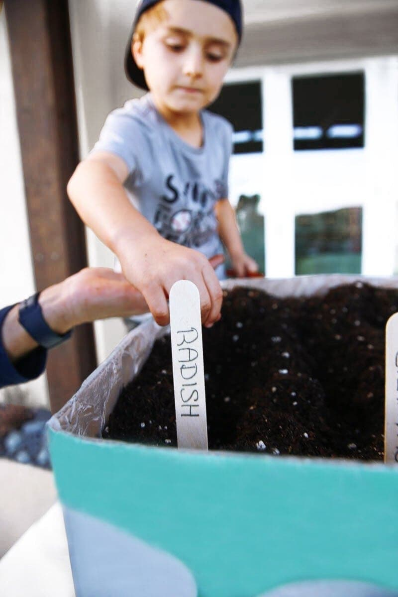 Boy planting radishes in the Boxed bee sanctuary