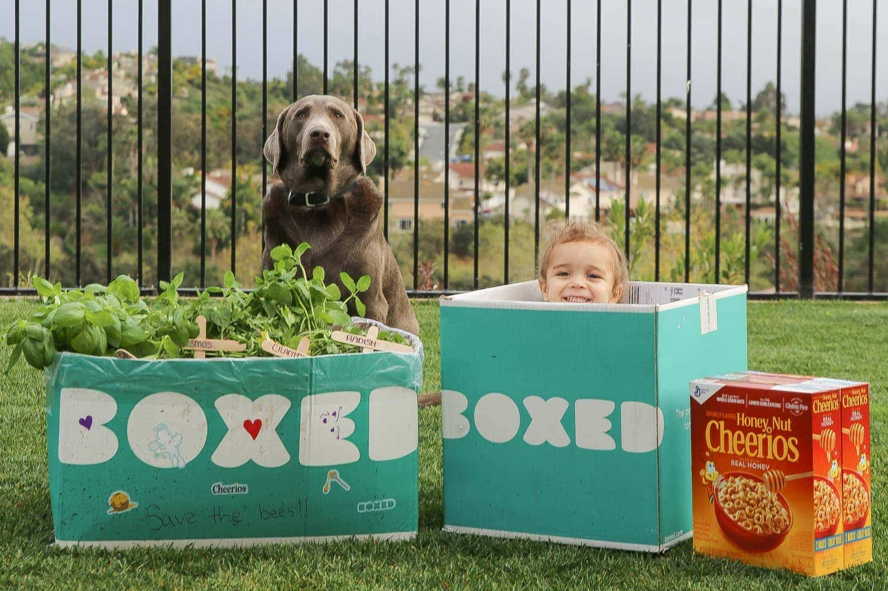 Child and family dog playing in the Boxed and Honey Nut Cheerios mini garden