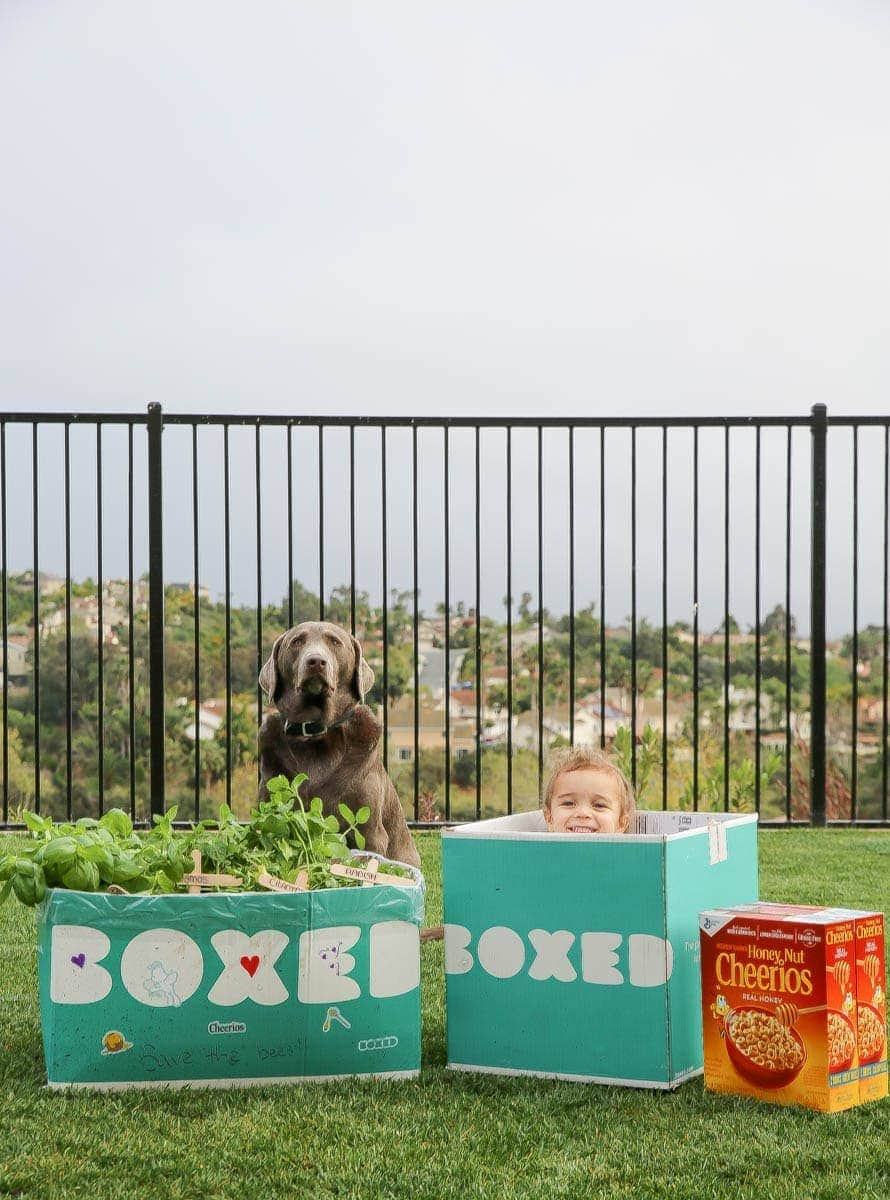 Child and Labrador playing in the Boxed and Honey Nut Cheerios mini garden