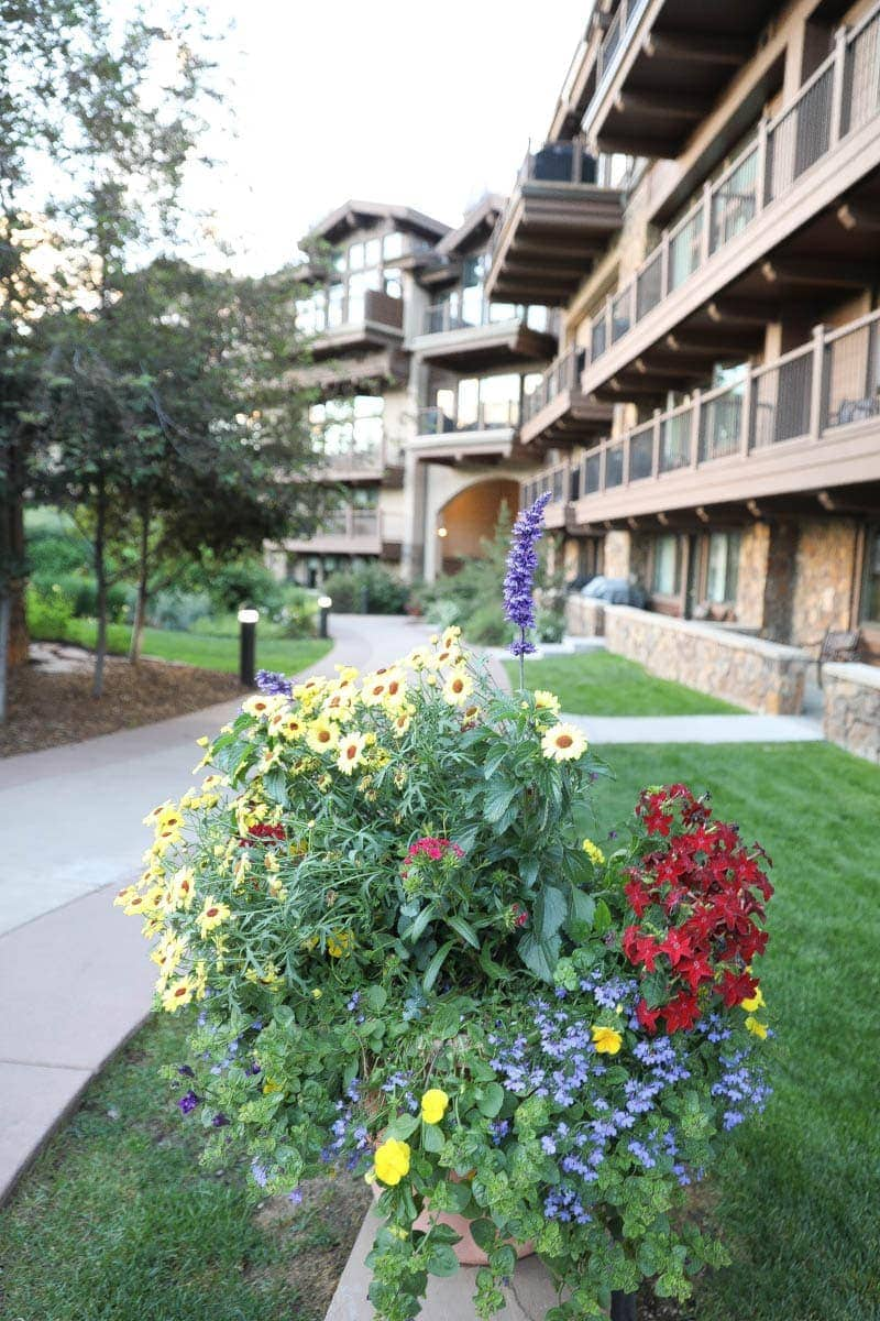 Beautiful Flowery Plants #summer #vailcolorado #vacation #citygirlgonemom