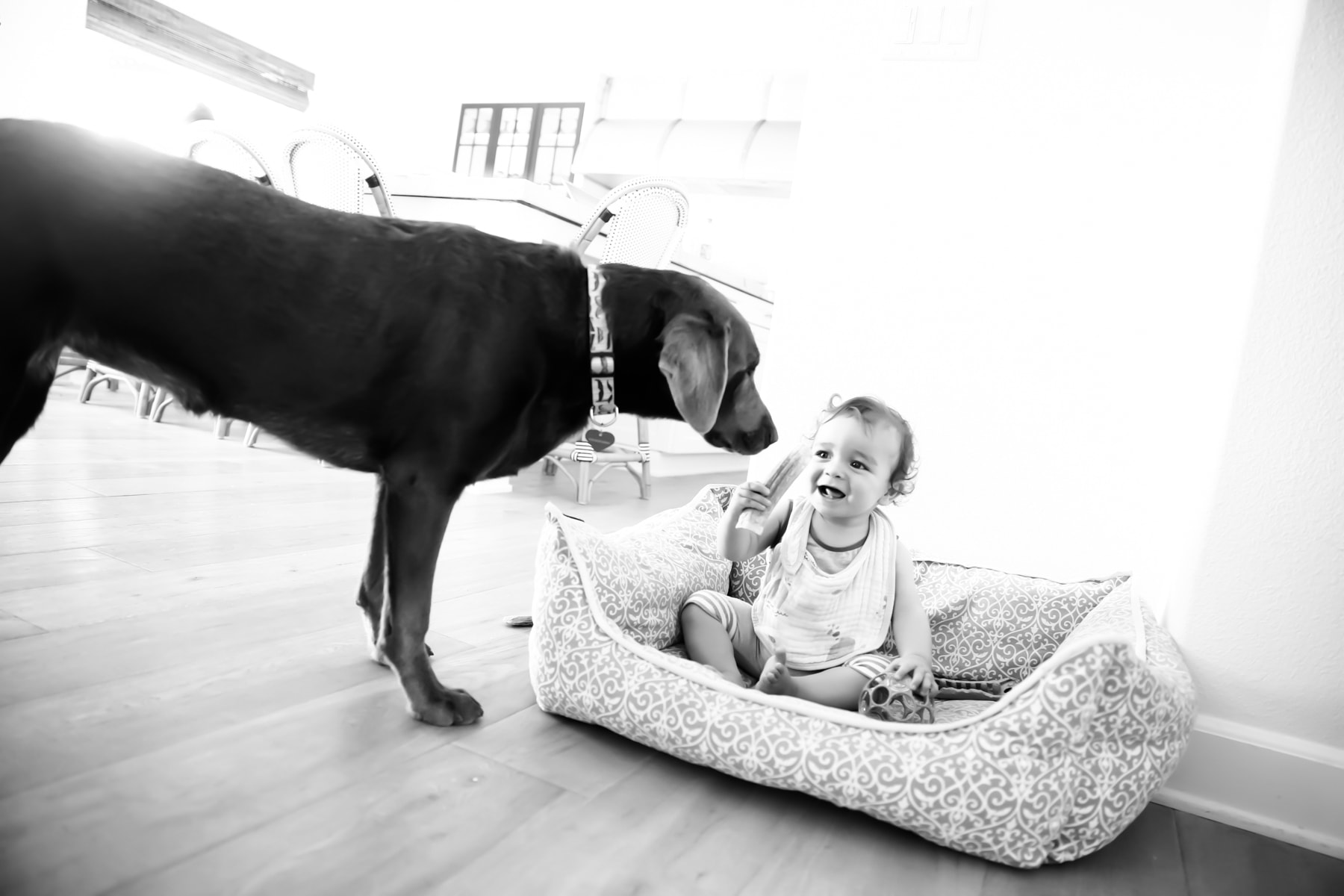 Kid on Dog's Bed Smiling at the Dog #royalcanin #dog #dogfood #labrador #citygirlgonemom #Weimaraner