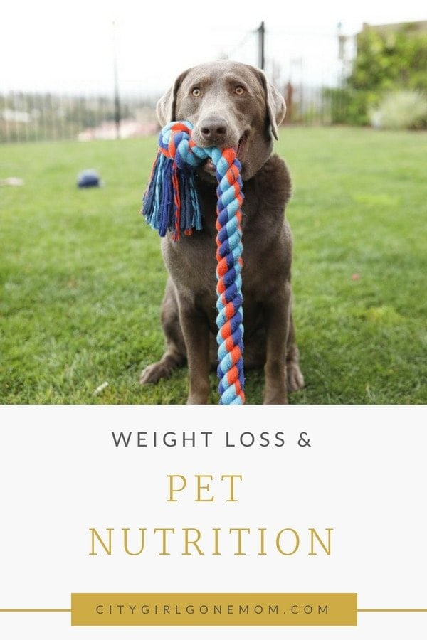 Fighting the beg and everything you need to know about Pet Nutrition! All pets have individual needs when it comes to diet! #petarticles #petnutrition #healthypets #pettips #dogproducts #healthydog #dogdiet #dogarticles