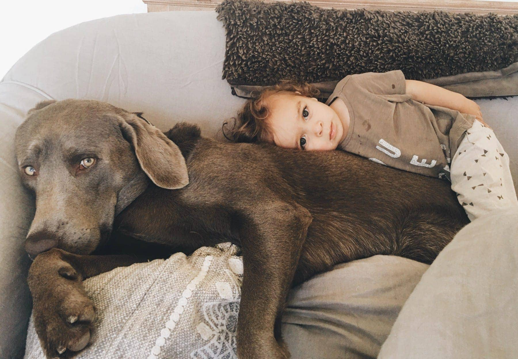Photo of a Dog and A Kid Lying Beside Each Other #royalcanin #dog #dogfood #labrador #citygirlgonemom #Weimaraner