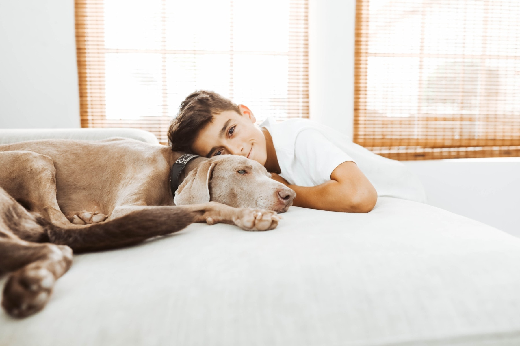 boy and his Weimaraner