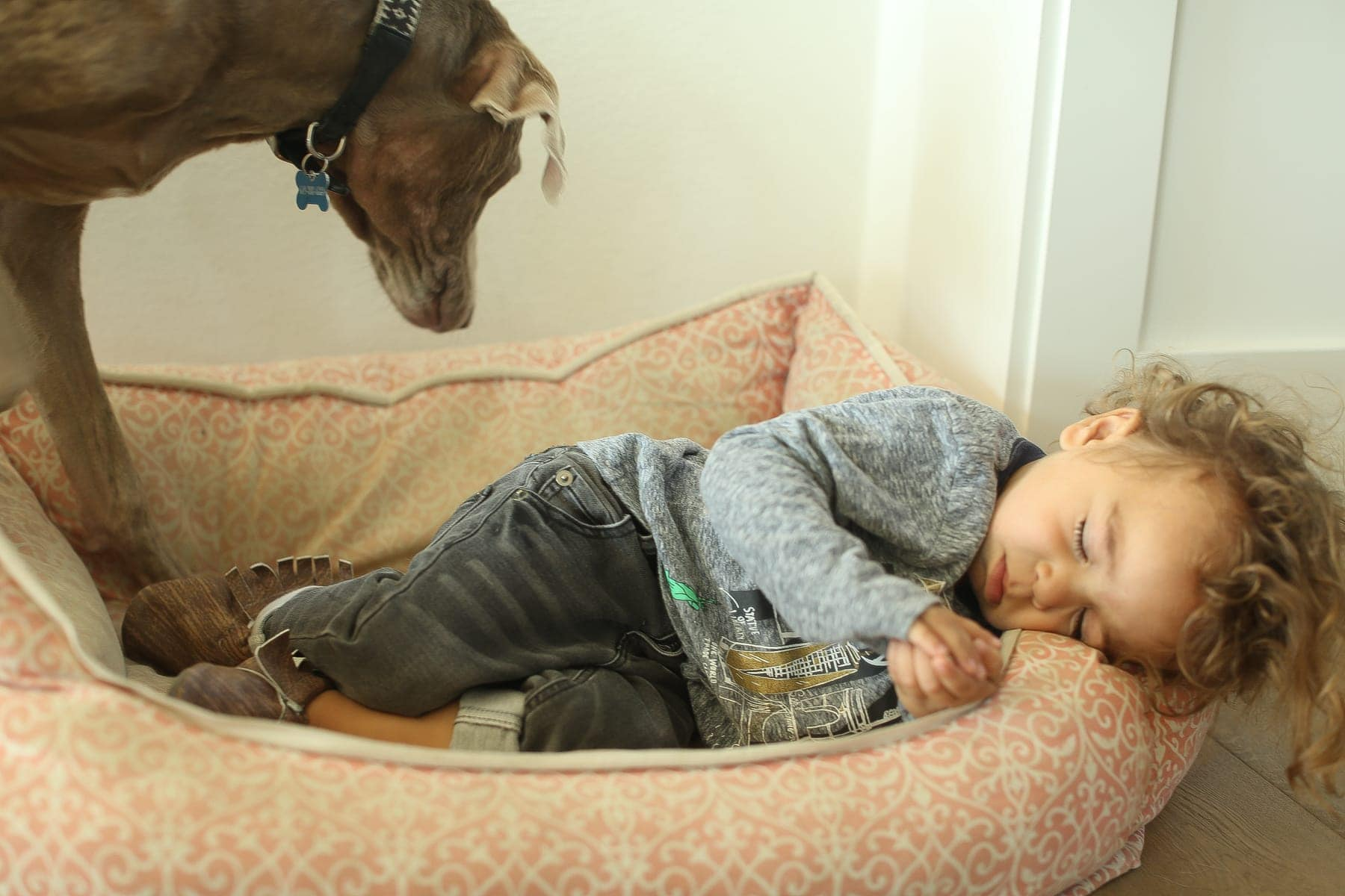 toddler sleeping in dog bed