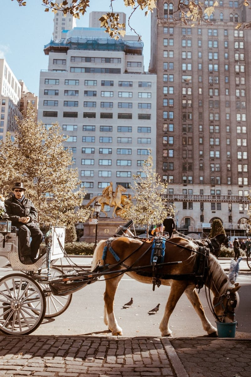 Horse and Carriage ride at Central Park