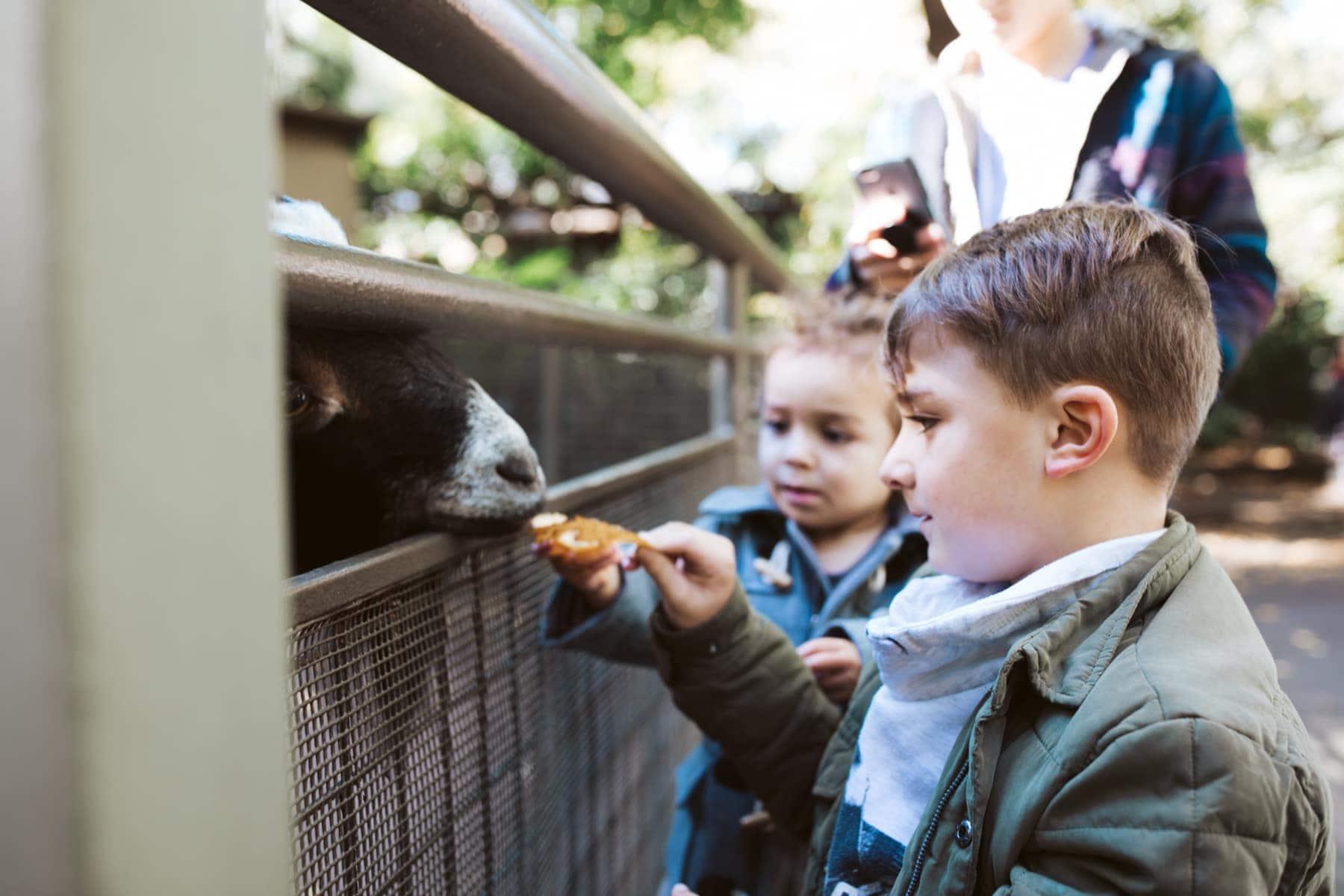 Central Park Zoo Feeding Goats