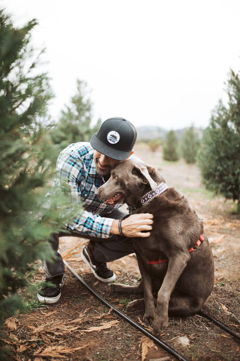 christmas tree farm silver lab
