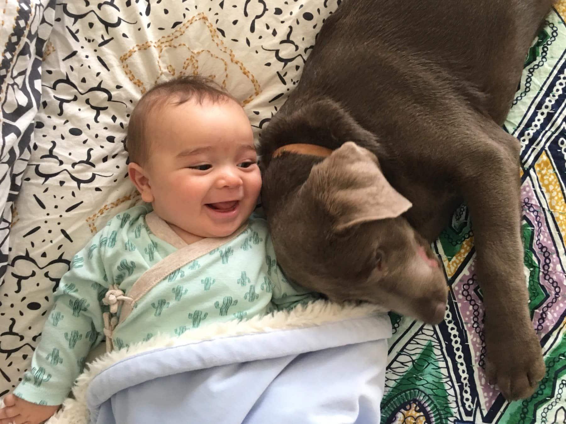 Labrador puppy and baby