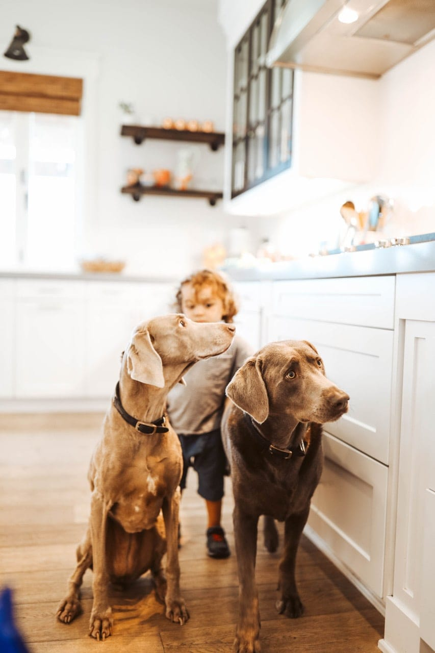 toddler with dogs