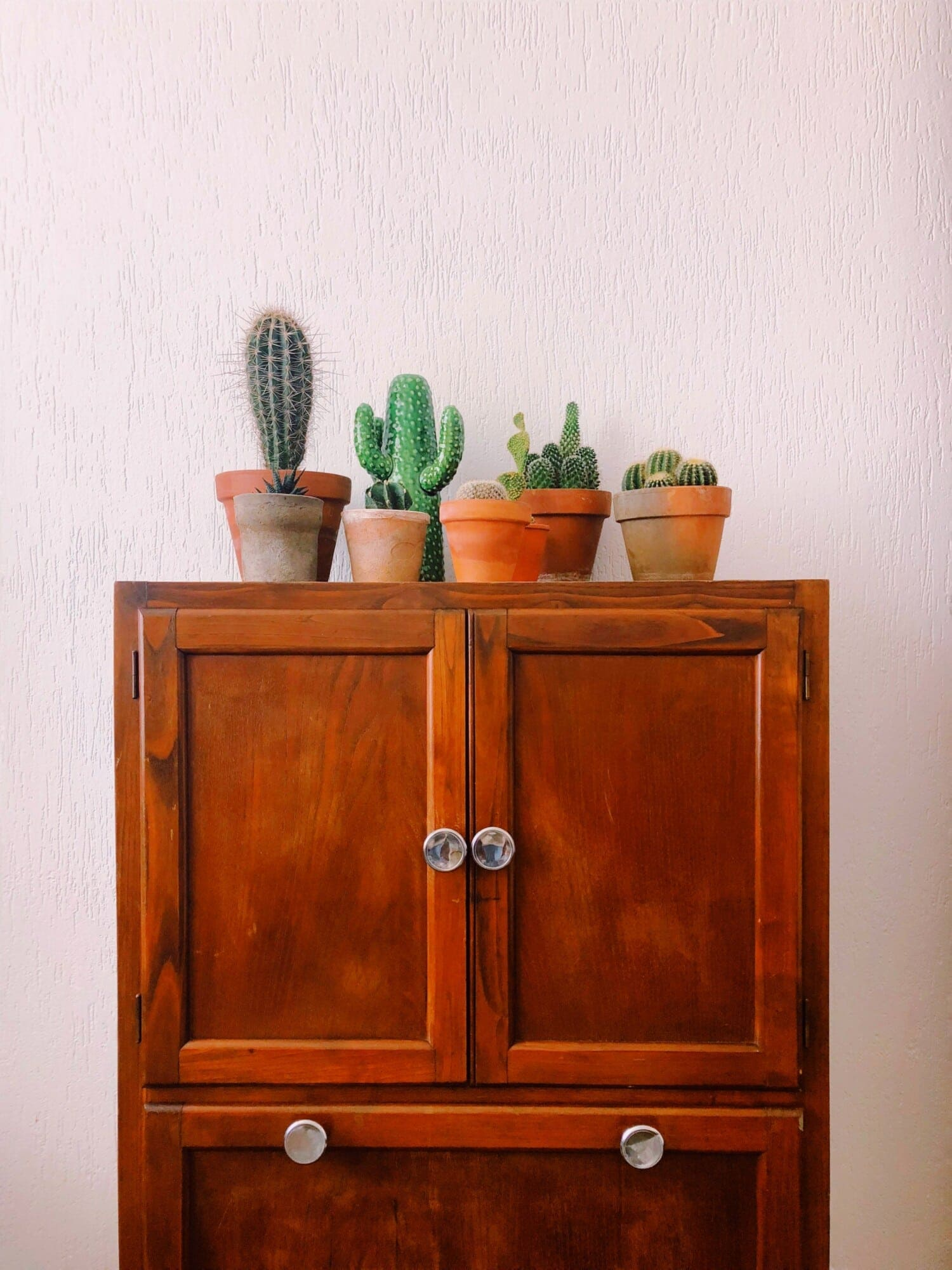 tiny cactus on cabinet