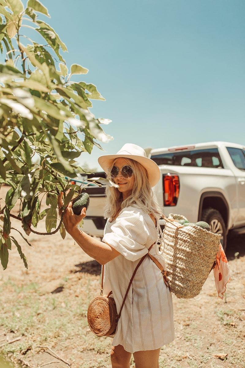 woman picking avocado