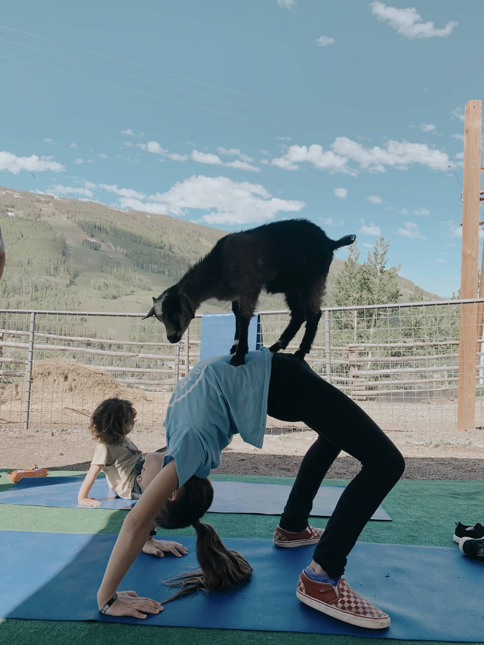goat yoga kid