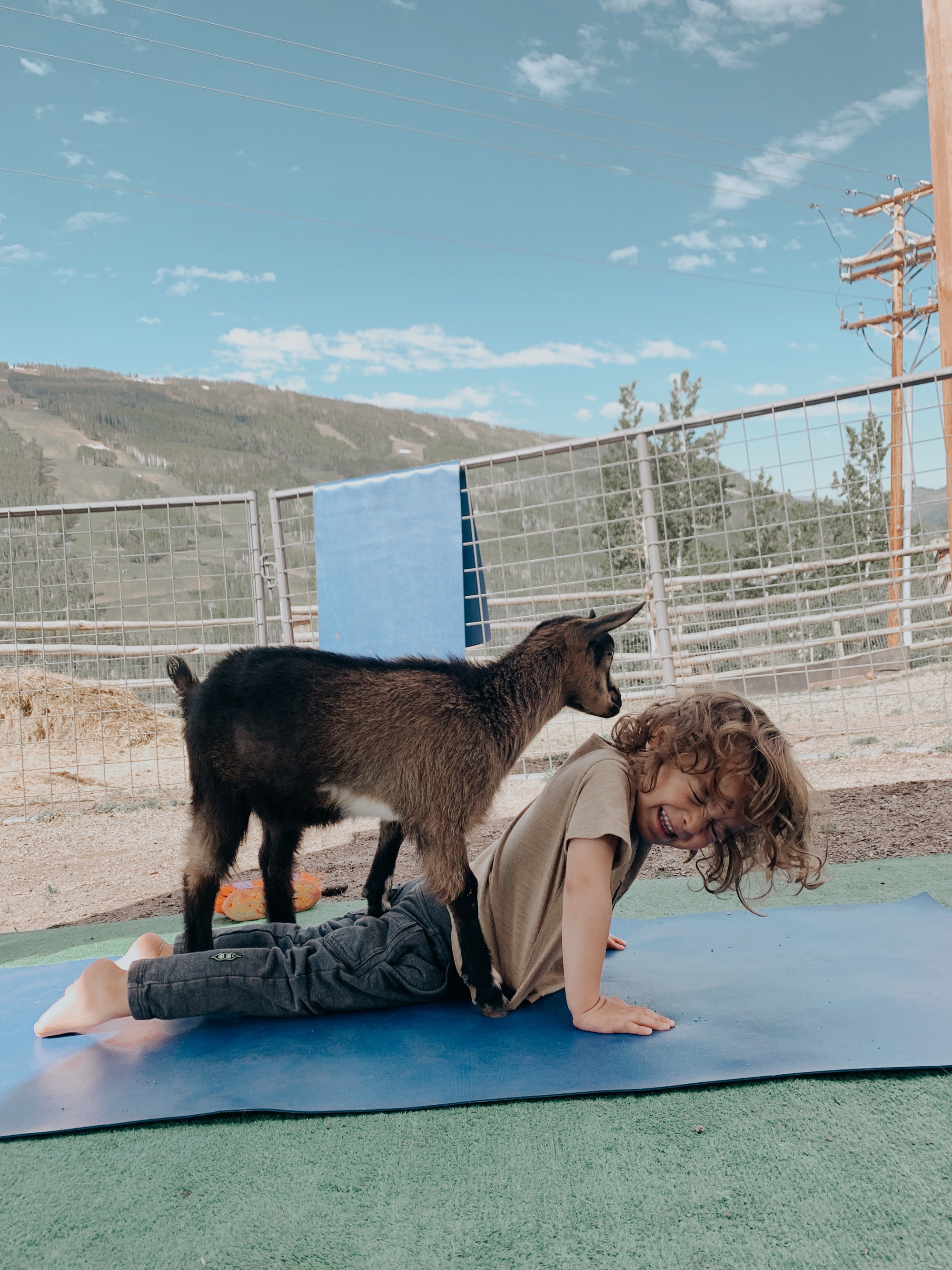 goat yoga baby
