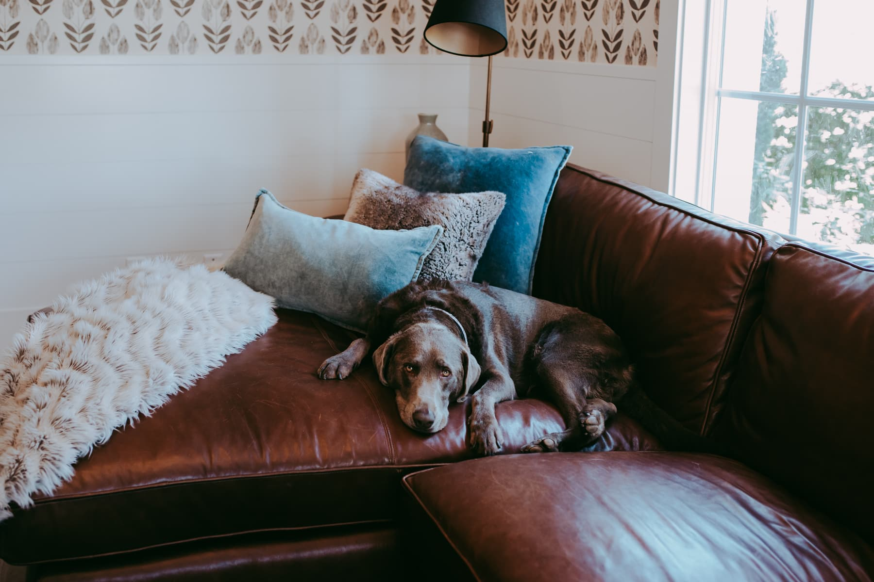 dog on brown couch