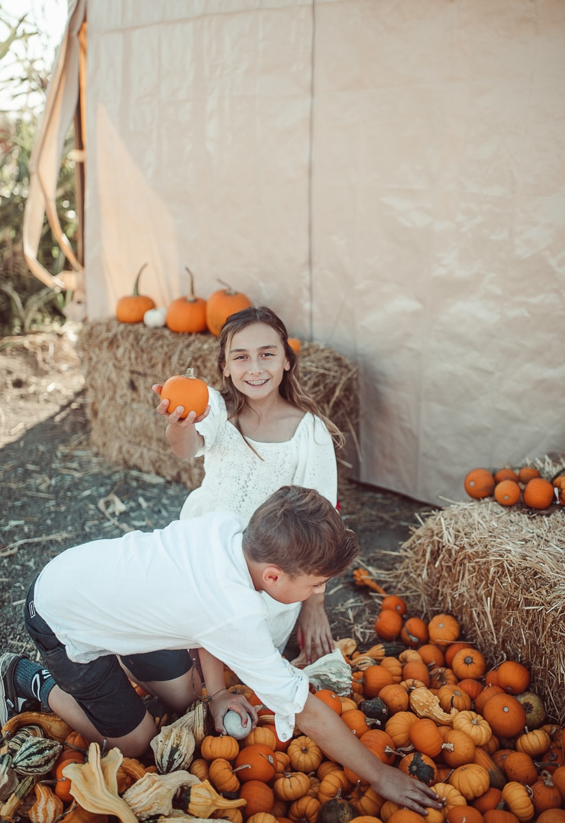 kids picking pumpkins