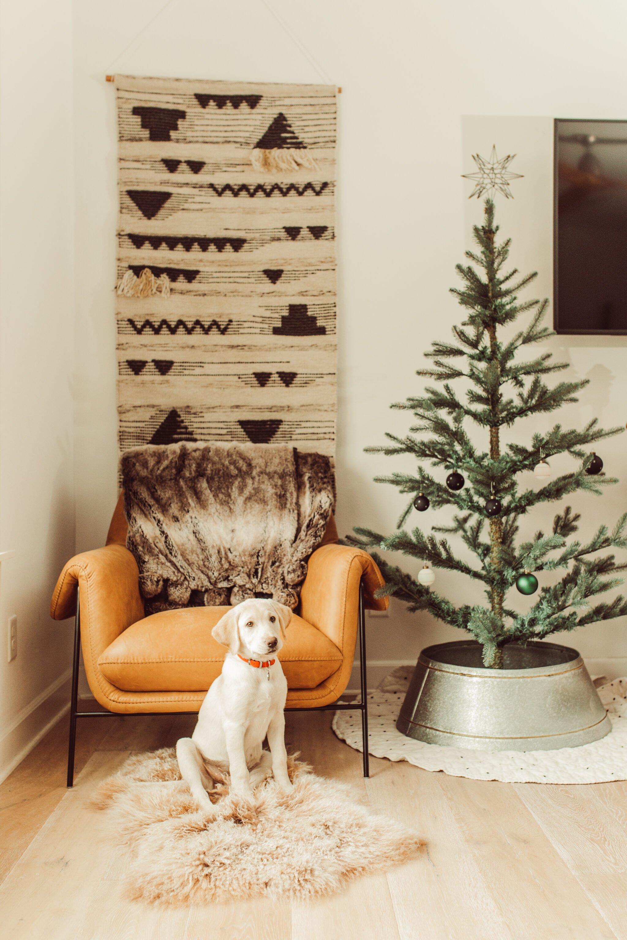 dog sitting by christmas tree