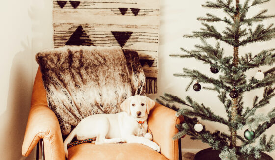 dog by christmas tree