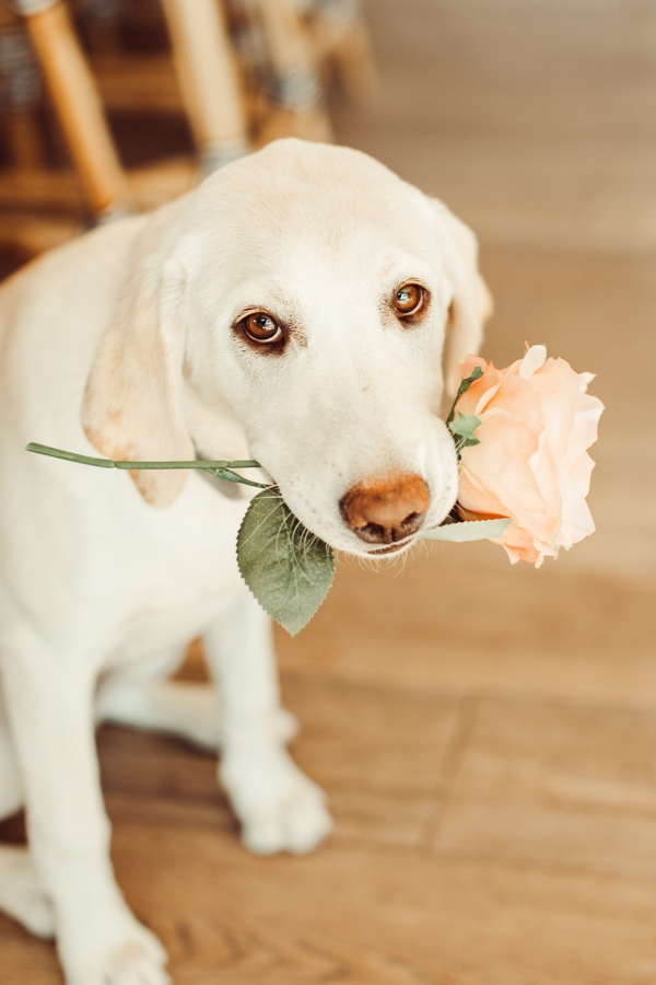 puppy dog with rose