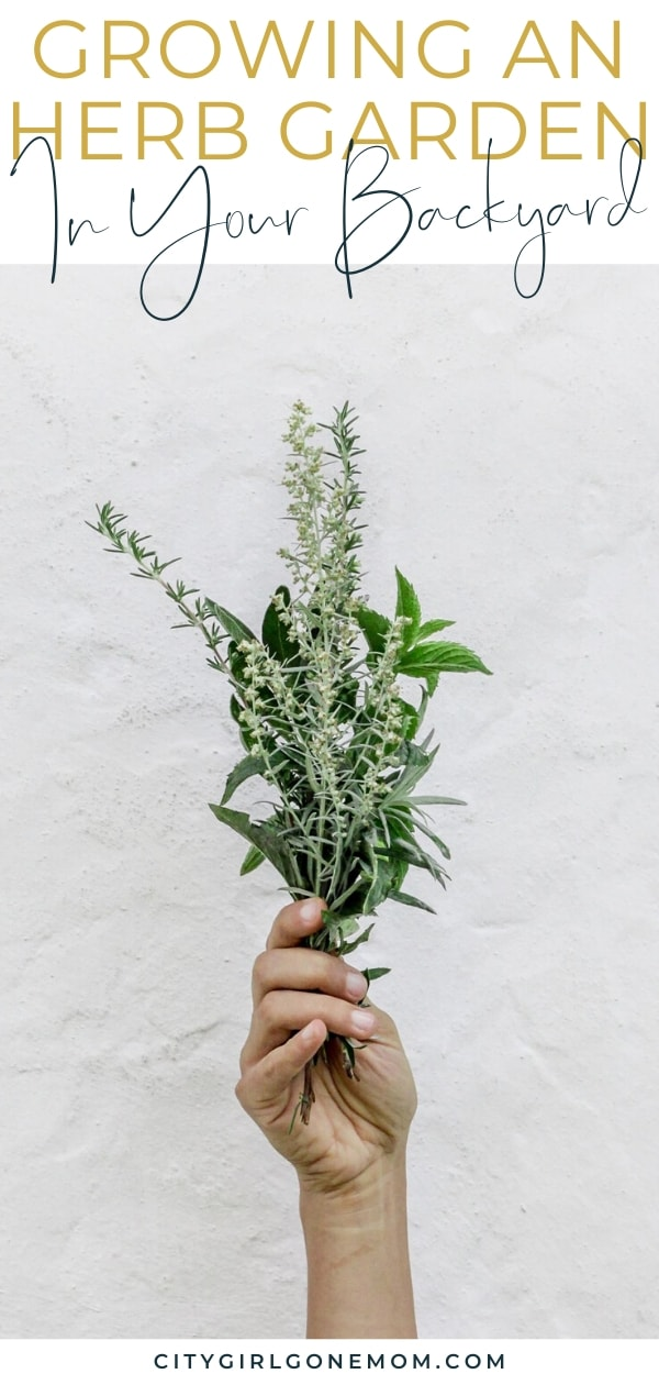 hand holding herbs