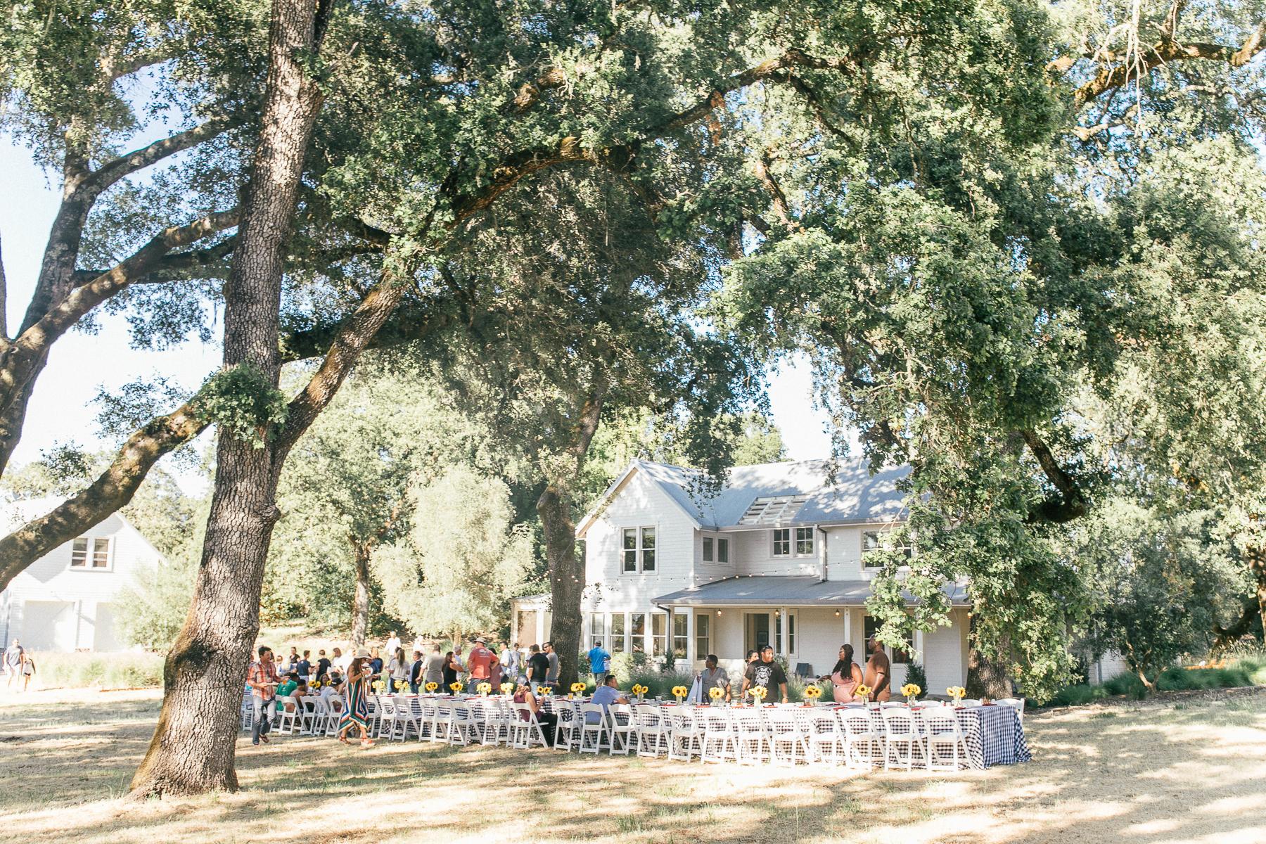 farmhouse under tree