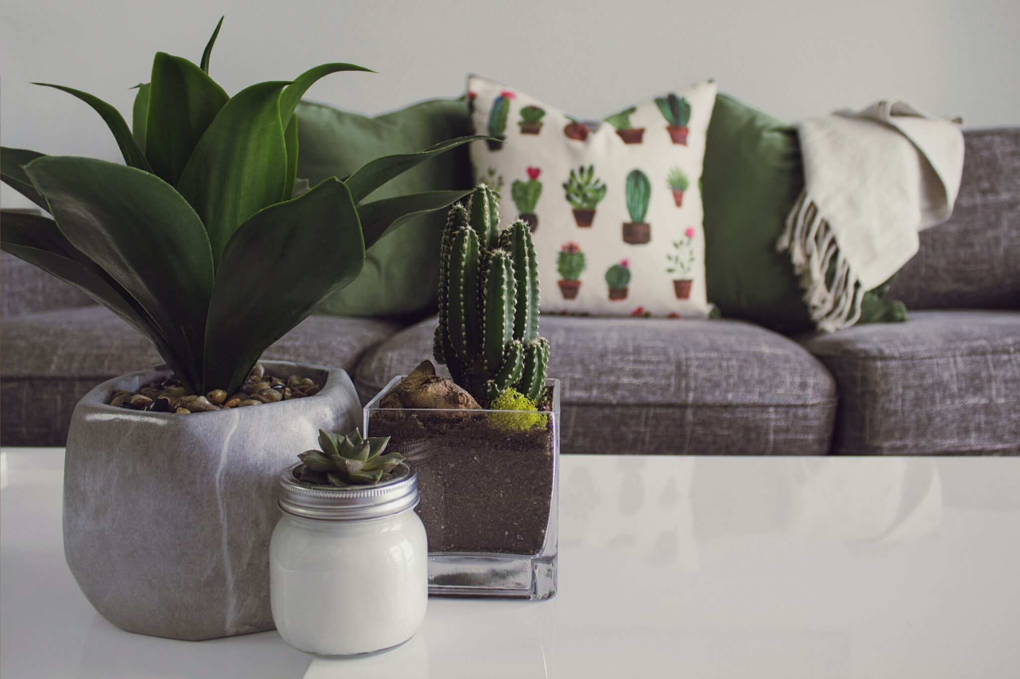 plants on coffee table