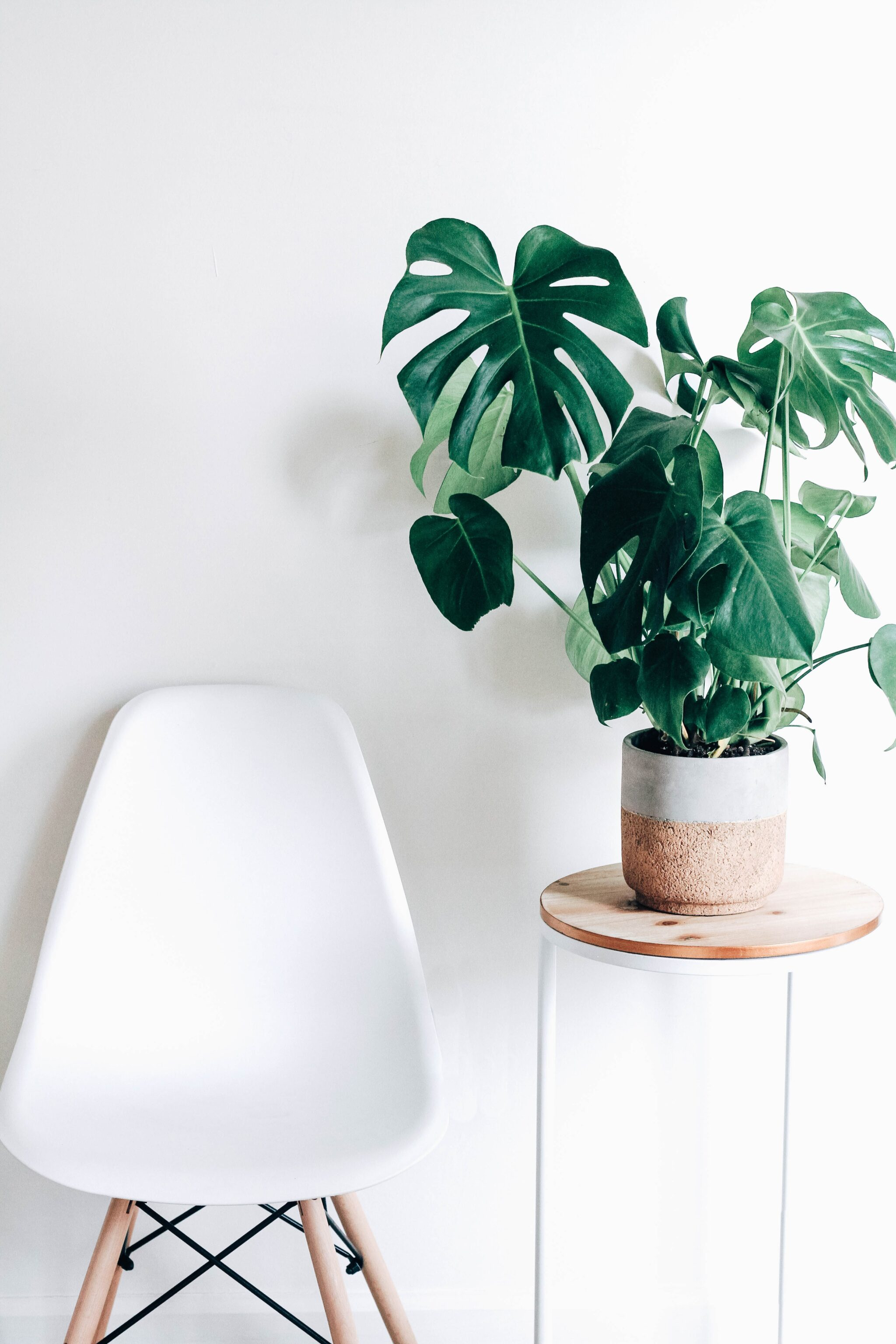 plant on table by chair