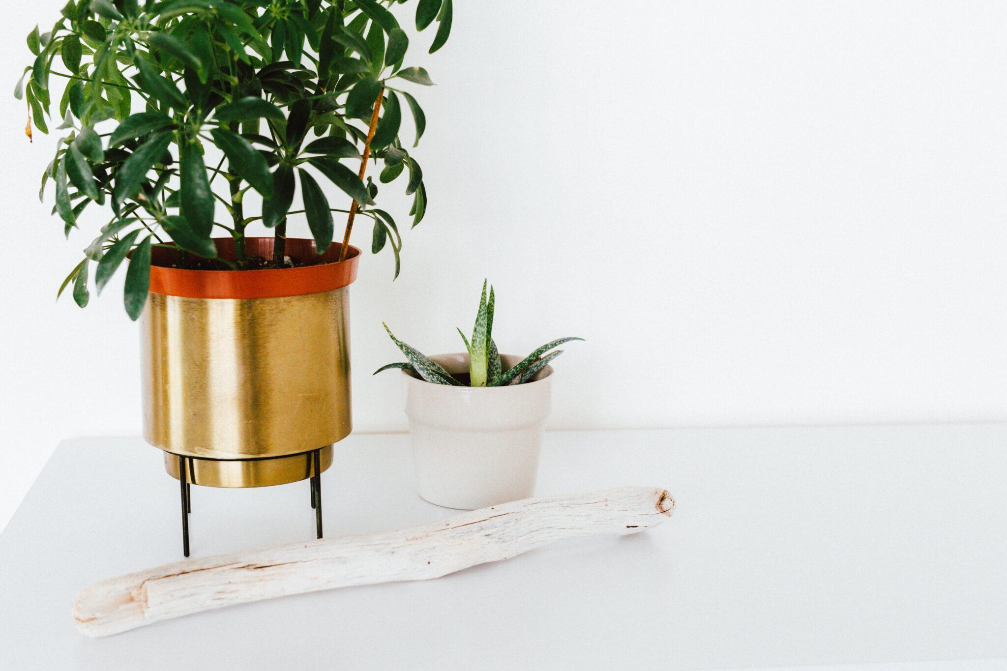 plants on desk