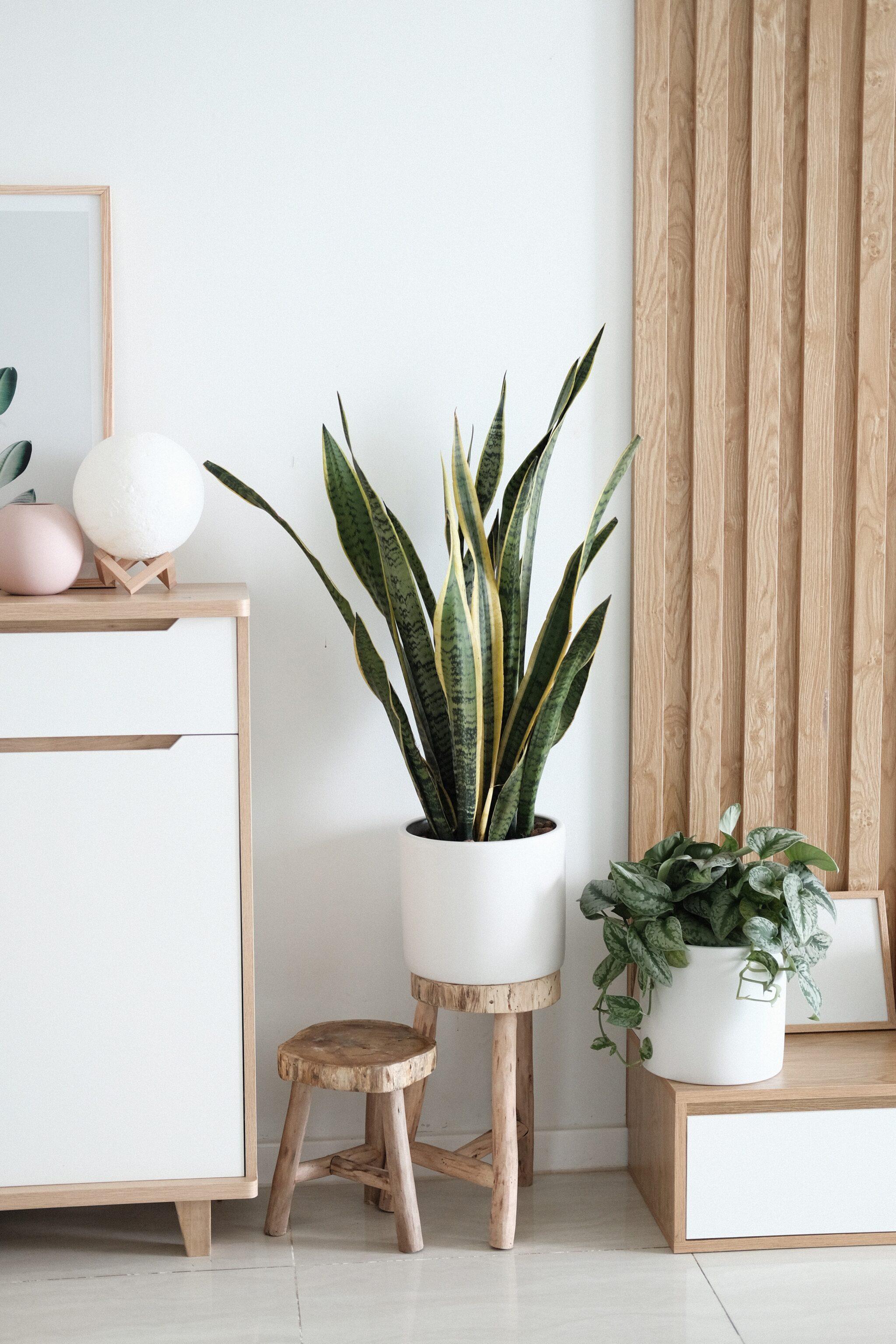 interior plant decor