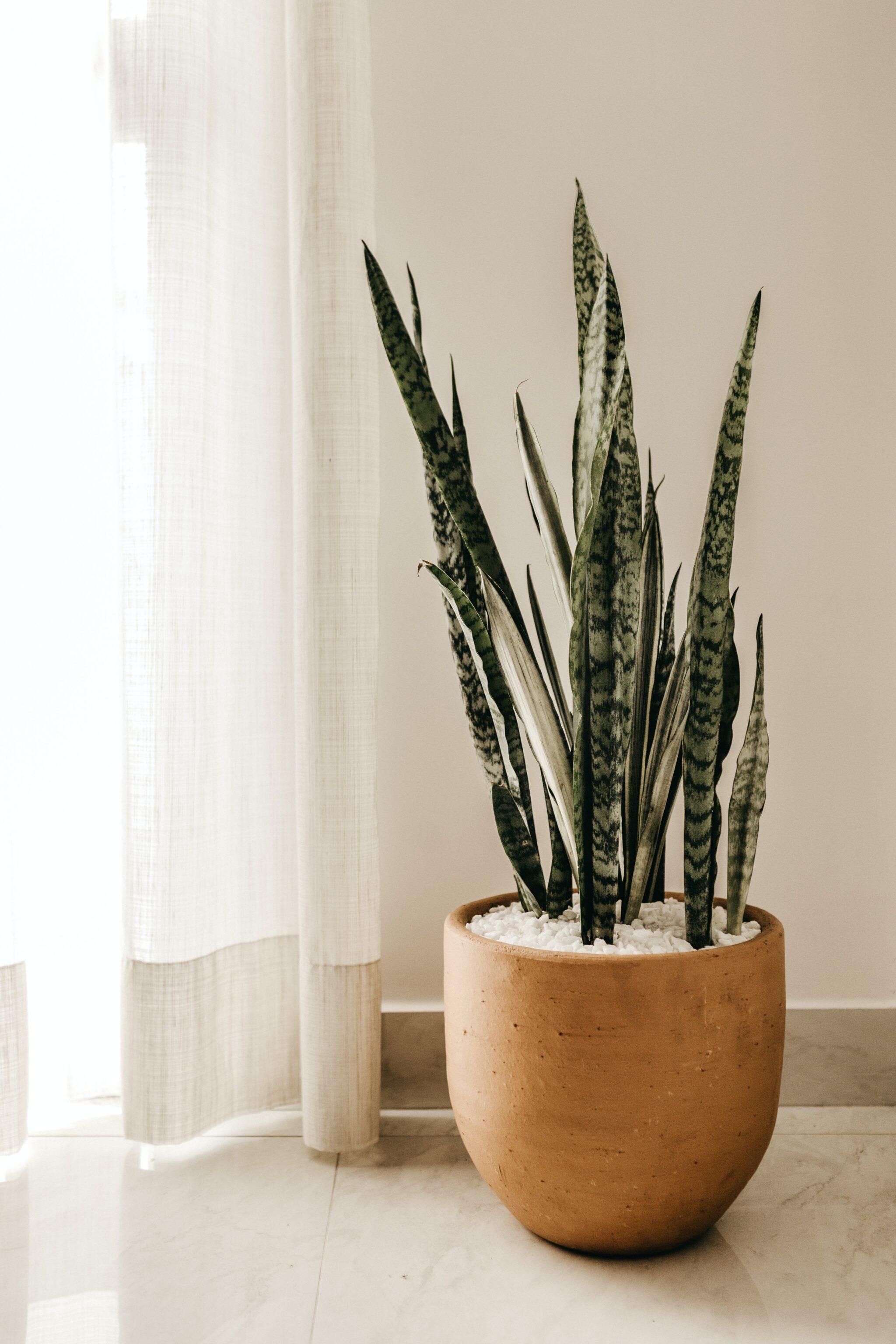houseplant by window