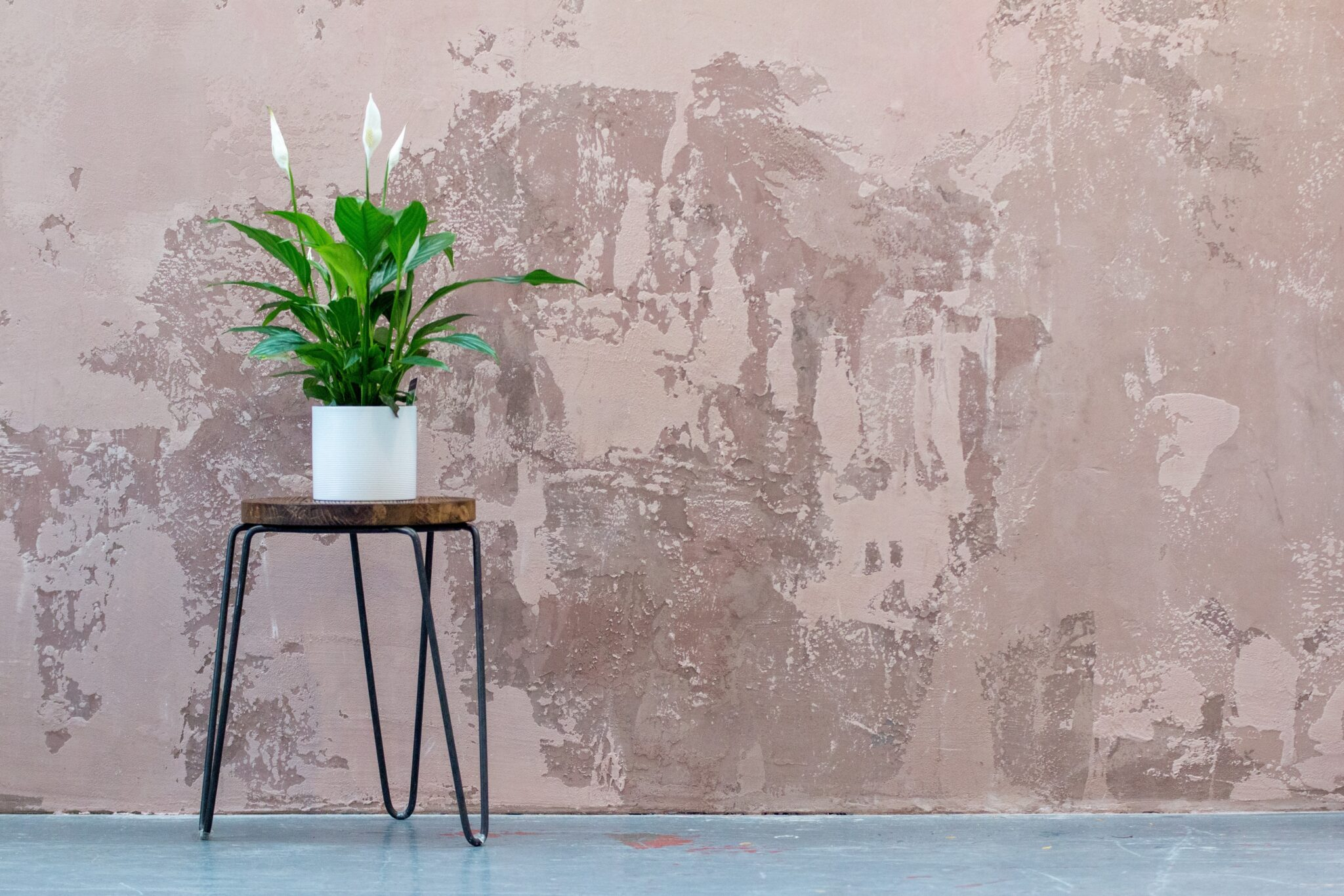 plant stand by pink wall