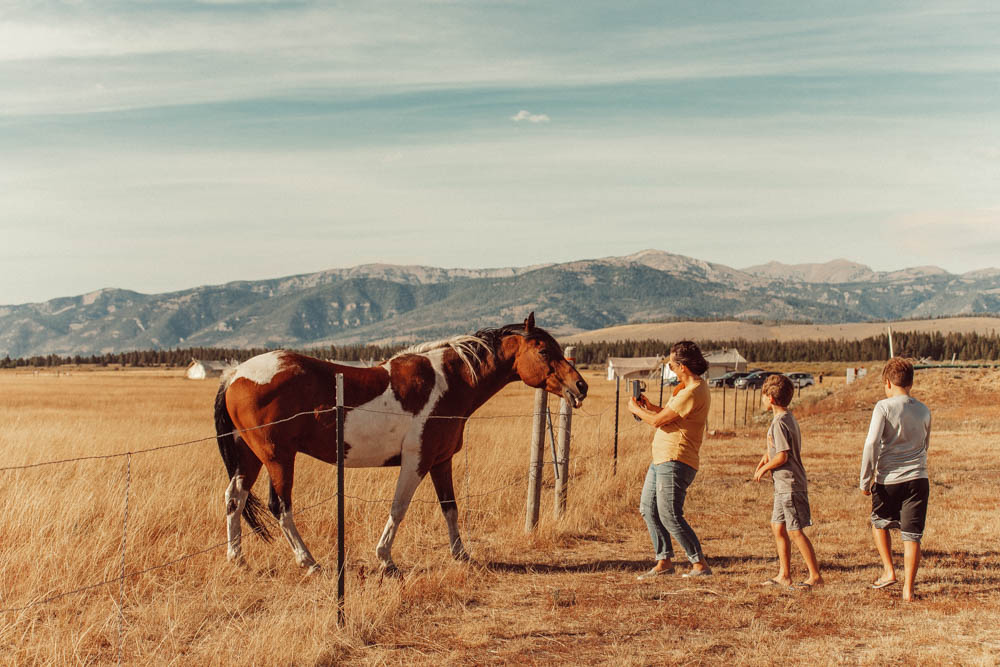 kids and a horse