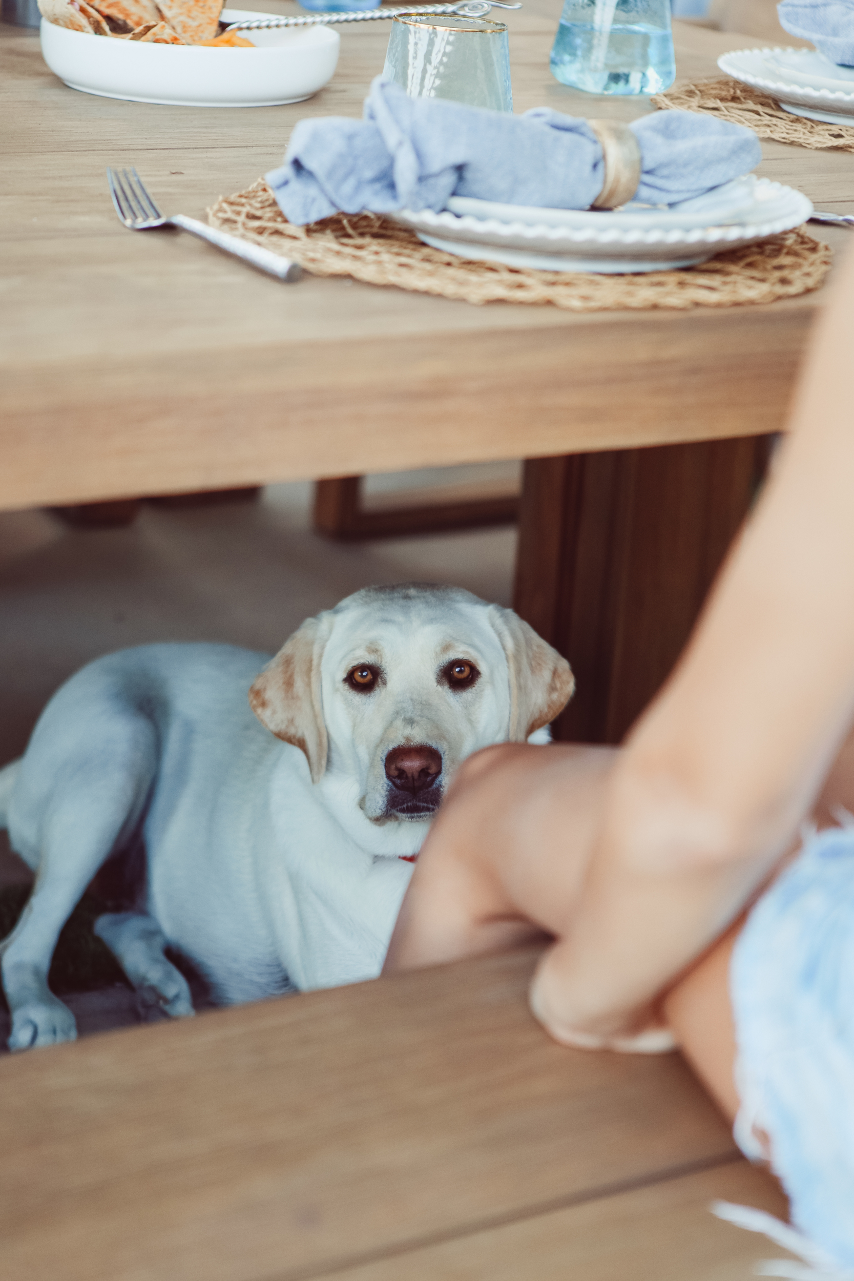 dog under the table